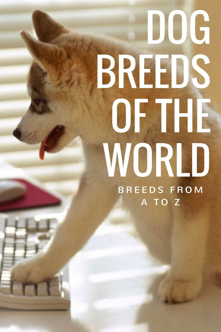 Dog Breeds of the World: Breeds from A to Z