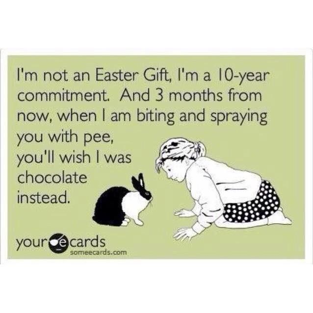 148 best not easterxmas gifts images on pinterest bunnies easter rabbits truths on easter giftxmas negle Choice Image