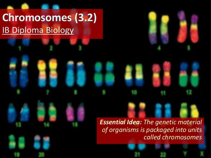 Slides covering material from Topic 3.2 of the updated IB Biology syllabus for 2016 exams