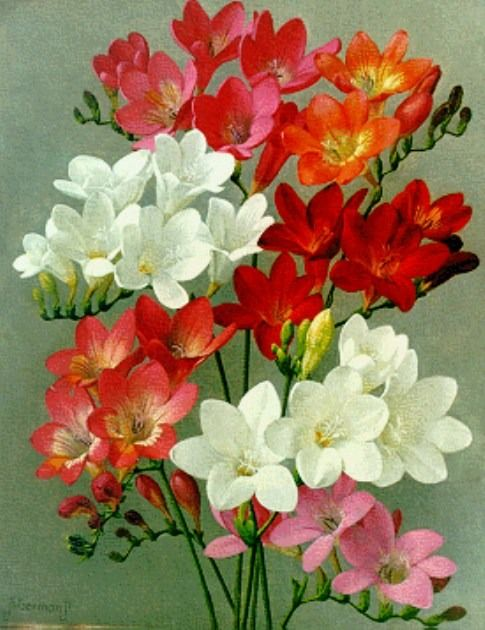 art-and-things-of-beauty:  Jan Voerman jun. (1890-1976). Freesias, oil on canvas, 30 x 23,9 cm.