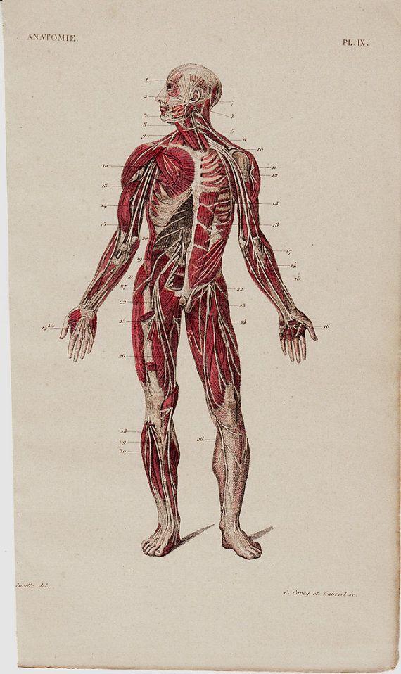 1005 besten XIXth Anatomy Bilder auf Pinterest | Anatomie, Anatomie ...