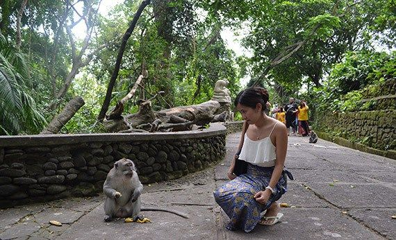 Monkey Forest.