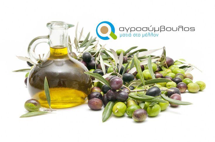 Καλλιέργεια Ελιάς   Καλλιεργητικές Τεχνικές   Olive cultivation