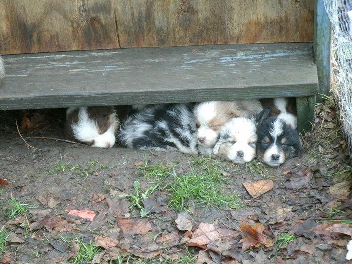 Cutest Sleeping Puppies