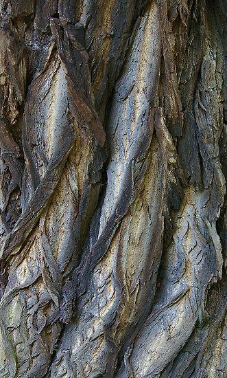 Tree Bark Textures with earthy grey tones - nature's artwork; organic texture inspiration