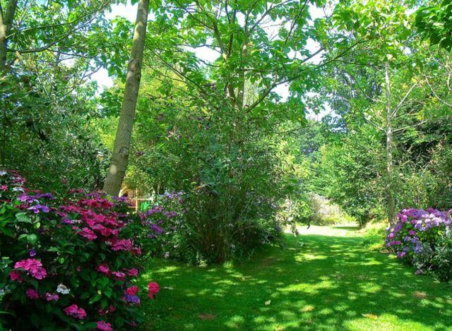 Les 25 meilleures id es de la cat gorie vivaces d 39 ombre for Plantes et arbustes vivaces