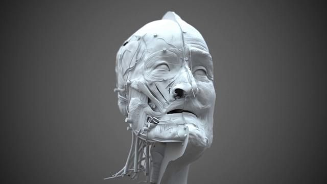 3D Forensic facial reconstruction, Visualforensic 2013 feb by Philippe FROESCH. Forensic facial reconstruction of former french king Henri IV killed in 1610, and based on the CTscan database of his skull. Made with Cinema 4D R13, VrayForC4D and Zbrush.
