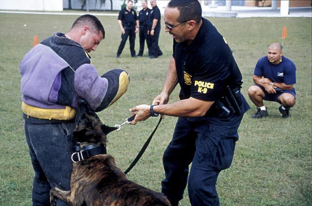 K-9 Police Officer Career Profile - Duties, Salary & More