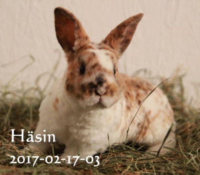 Unsere Zuckersussen Kleinrex Babies Suchen Ab 14 04 2018 Ein Neues Liebevolles Zuhause Geb Susse Kleinrex Konigsman Haustiere Zwergkaninchen Dalmatiner