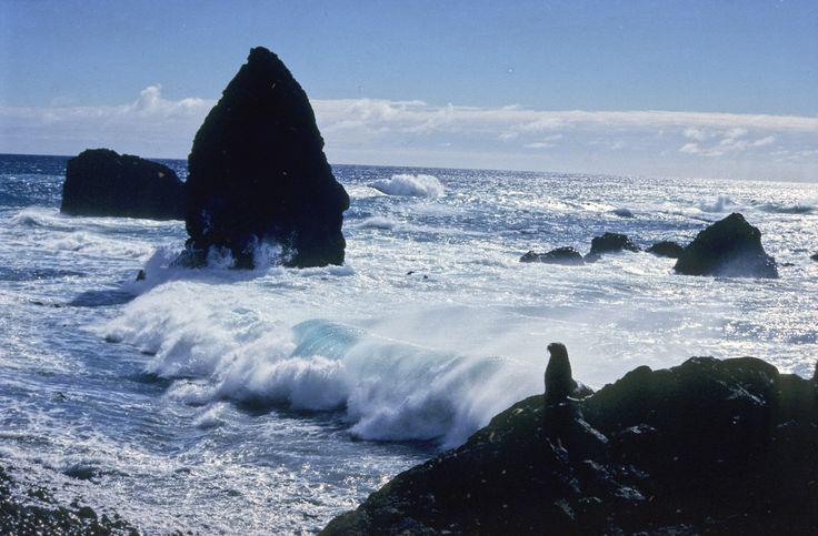 Beach of Nyrøysa, Bouvet Island