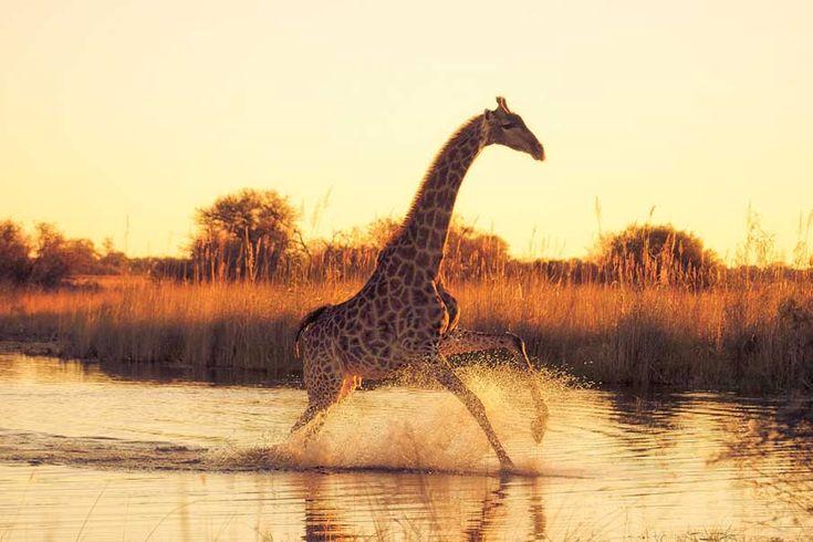 Really cool animal photos