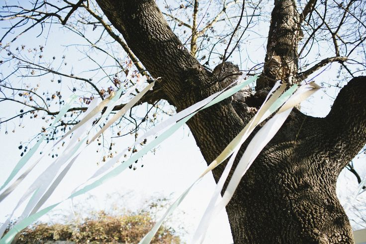 Streamers hanging from tree's make an amazing decoration for children's parties