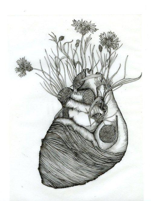 lucypereira: 1000drawings: Centaurea cyanus heart 2014 aprox. 21cm X 15cm pen over tracing paper lucy pereira http://lucypereira.tumblr.com/