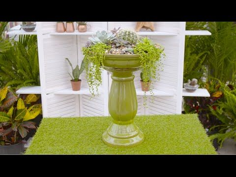 This week Michelle uses a birdbath to show how you can add unique beauty to any outdoor garden! #TerraHowTo