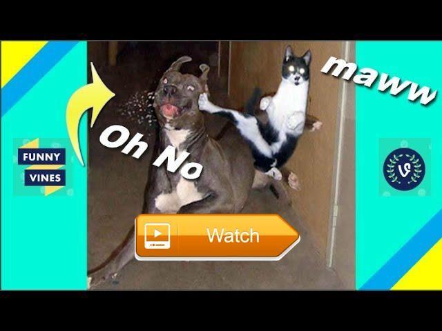 Funniest Cat Vs Dog Video Compilation of Funny cats  Le chat le plus drle contre la compilation vido pour chien de Funny Pet Videos  on Pet Lovers