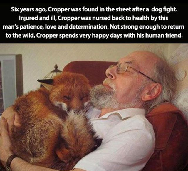 Six years ago, Cropper was found in the street after a dog fight. Injured and ill, Cropper was nursed back to health by this man's patience, love and determination. Not strong enough to return to the wild, Cropper spends very happy days with his human friend.