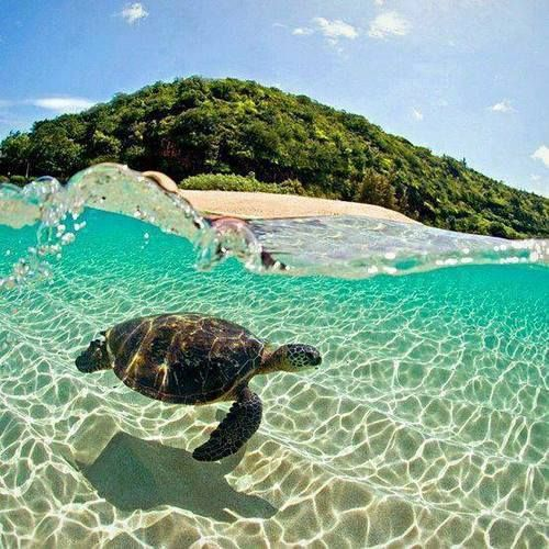 Love sea turtles. This photo was taken in Brazil. The water looks awesome too.