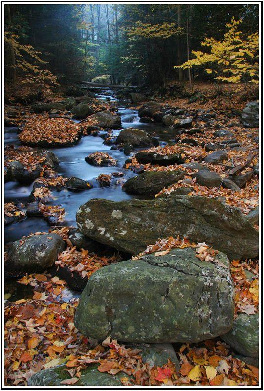 Fall Colors, Wachocostinook Brook, Salisbury, Connecticut