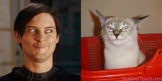 Spiderman VS Cat
