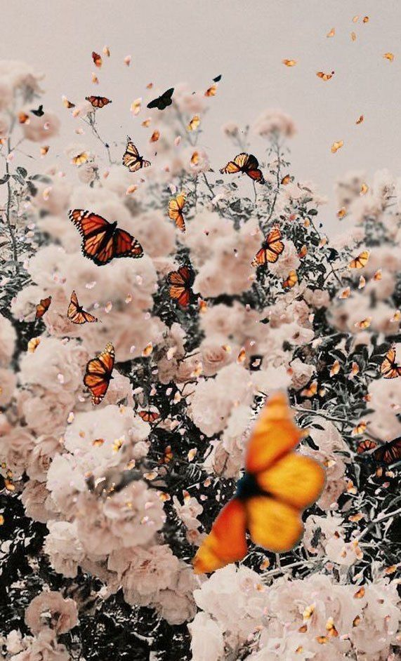 Locks Screen Iphone Wallpaper Butterfly And Flowers Iphone Wallapaper Ipho In 2020 Butterfly Wallpaper Iphone Aesthetic Iphone Wallpaper Iphone Background Wallpaper