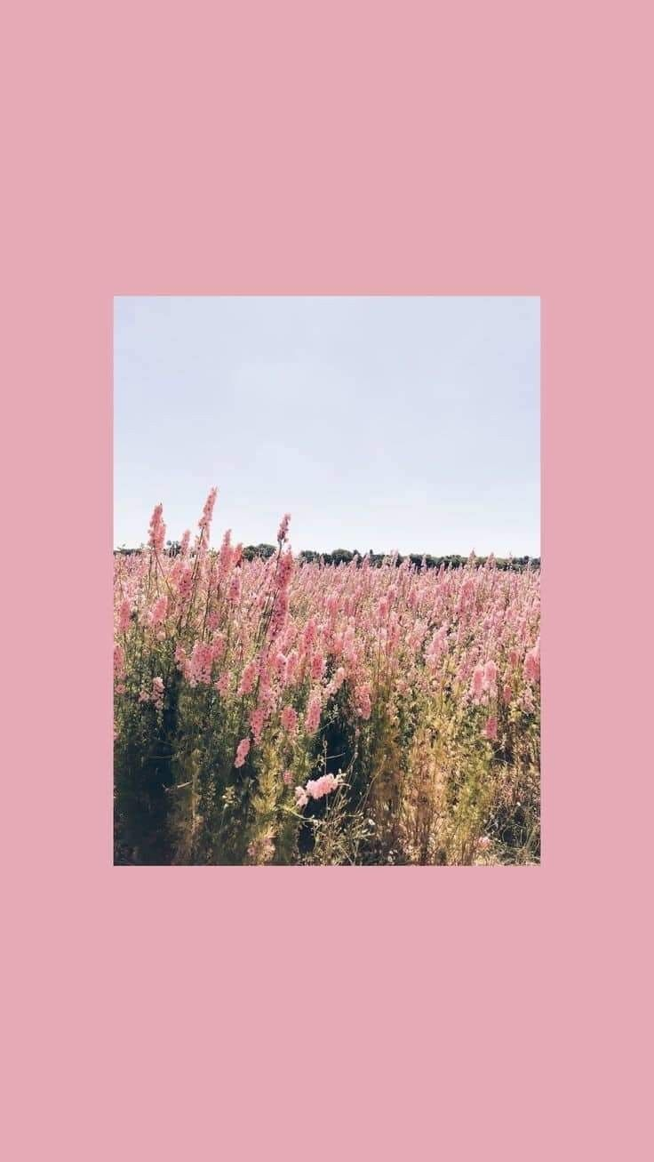 Pretty Iphone Wallpaper In 2020 Aesthetic Wallpapers Pretty Wallpapers Aesthetic Iphone Wallpaper