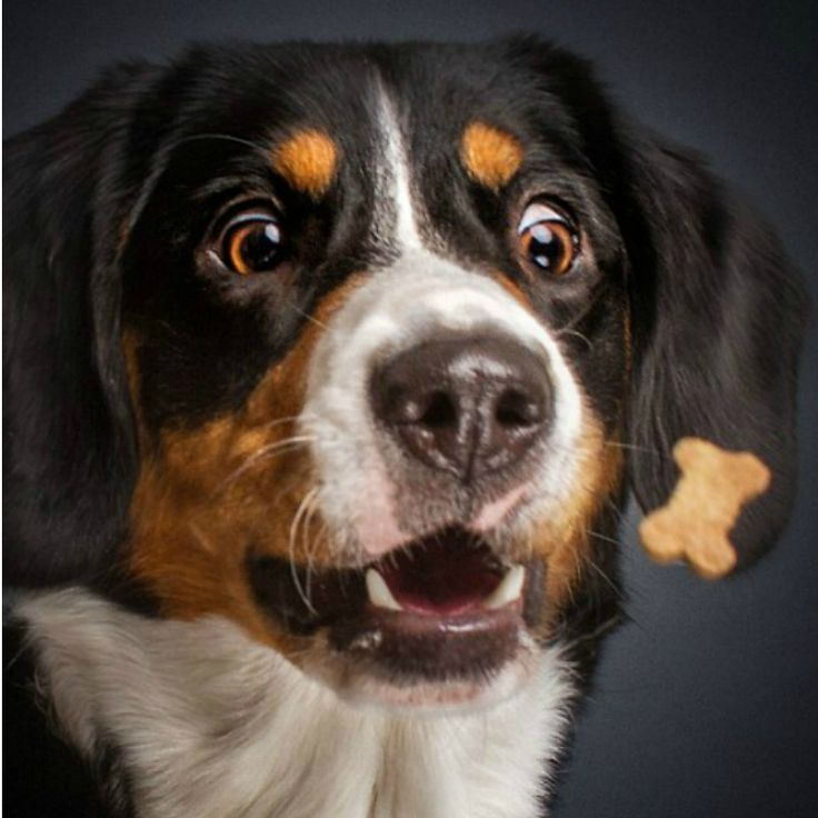 Dogs Photographed Catching Treats Is As Funny As It Sounds
