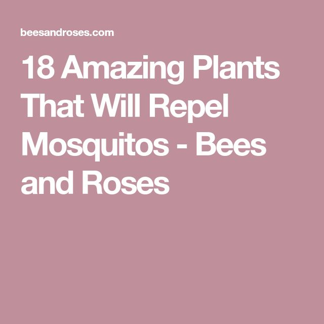 18 Amazing Plants That Will Repel Mosquitos - Bees and Roses
