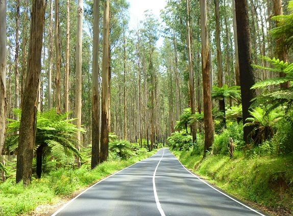 Takin' a drive past Healesville to Marysville along the Maroondah Highway.  www.marysvilletourism.com/visit_marysville-apps/
