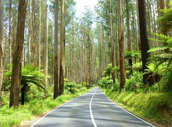 Healesville, Maroondah Highway