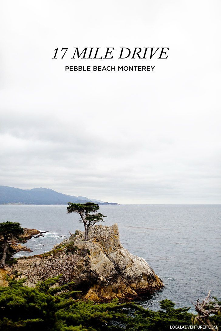 The Lone Cypress on the 17 Mile Drive in Monterey // http://localadventurer.com