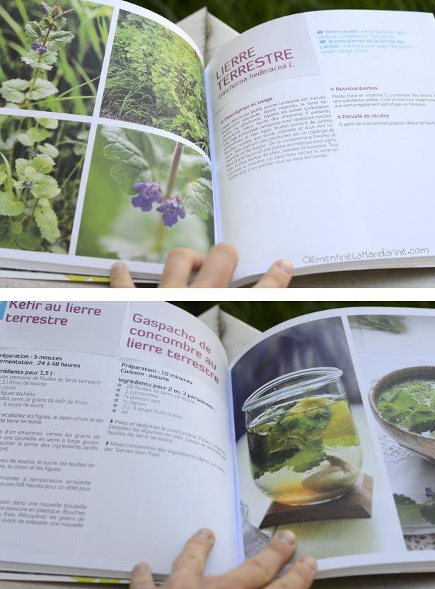 Manger des plantes sauvages : livre de recettes et de conseils de cueillettes