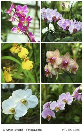 1000 ideas about zimmerpflanzen pflege on pinterest orchids phalaenopsis and venusfliegenfalle. Black Bedroom Furniture Sets. Home Design Ideas