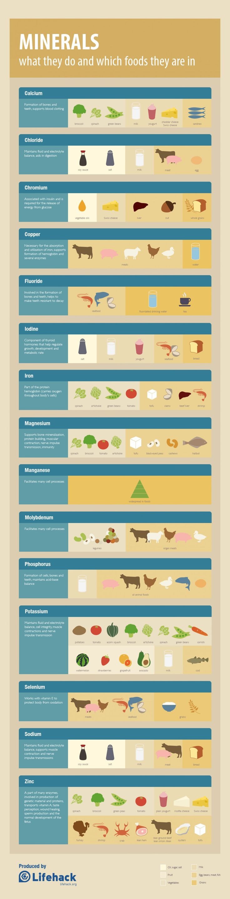 Everything You Need to Know About Minerals - We know that taking the right carbs, protein, healthy fats and vitamins are vital, but we rarely talk about minerals. Taking in enough and the right type of minerals is also important. This cheat sheet will explain everything you need to know about minerals and which foods contain them    - If you like this pin, repin it and follow our boards :-)  #FastSimpleFitness - www.facebook.com/FastSimpleFitness
