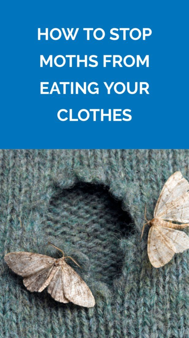 How To Stop Moths From Eating Your Clothes Moth Moths Eating Clothes Moth Holes In Clothes