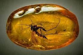 Afbeeldingsresultaat voor prehistorische dieren