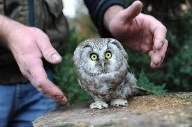 Image result for huge eyed owl