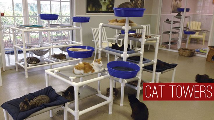 Feline snoozers cat towers keeping cats clean healthy for Diy cat tree pvc pipe