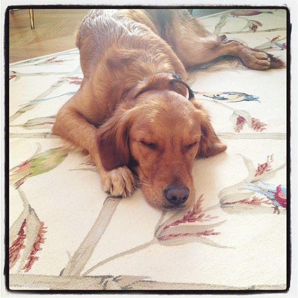 She having her beauty sleep! Melachi Mika's dog