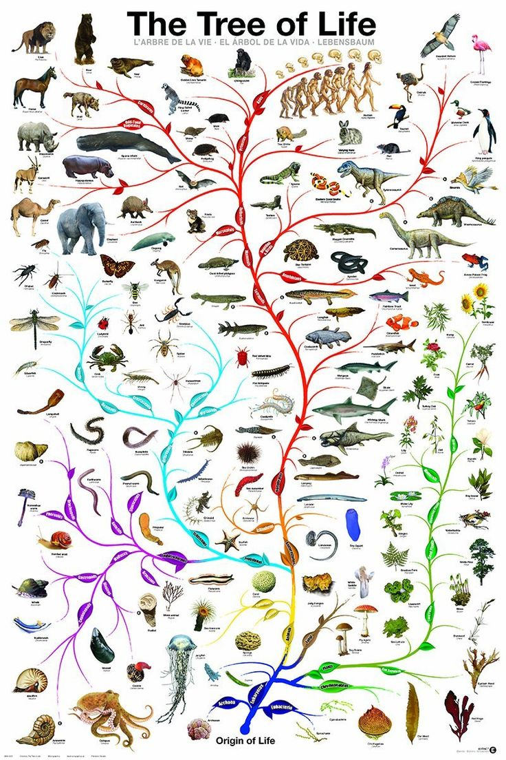 TOUCH this image: Taxonomy and Evolution Review by Sarah Lord