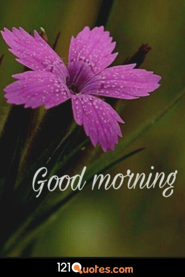 Morning Glory Flower Images Goodmorning Goodmorningquotes Morning Morningbeauty Good Morning Images Good Morning Friends Images Lovely Good Morning Images