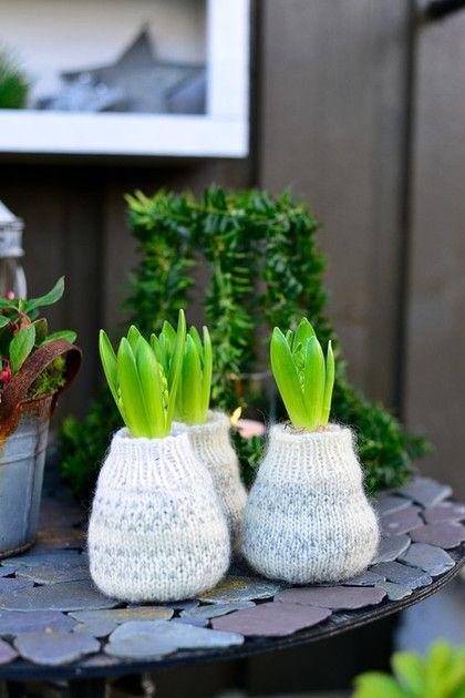 Svibler er jul for Inger Marie, og en av hennes desiderte favoritter. Disse har fått hjemmestrikkede sokker! Du kan enkelt lage lignende selv ved å klippe enden av ermene på en ullgenser du ikke lenger bruker, og deretter snurpe sammen i bunnen.