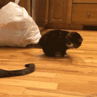 Sure, I'll play with your tail...... later.