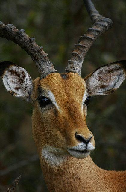 Animais selvagens #animals