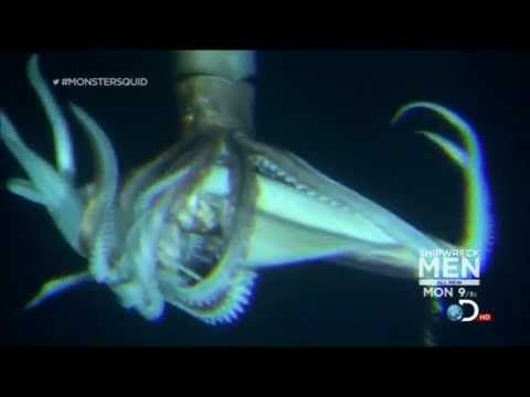 """This is a spliced video of the key squid footage from Discovery Channel's """"Monster Squid"""" broadcast on January 27, 2013. Thank you Discovery Channel for broadcasting this program."""