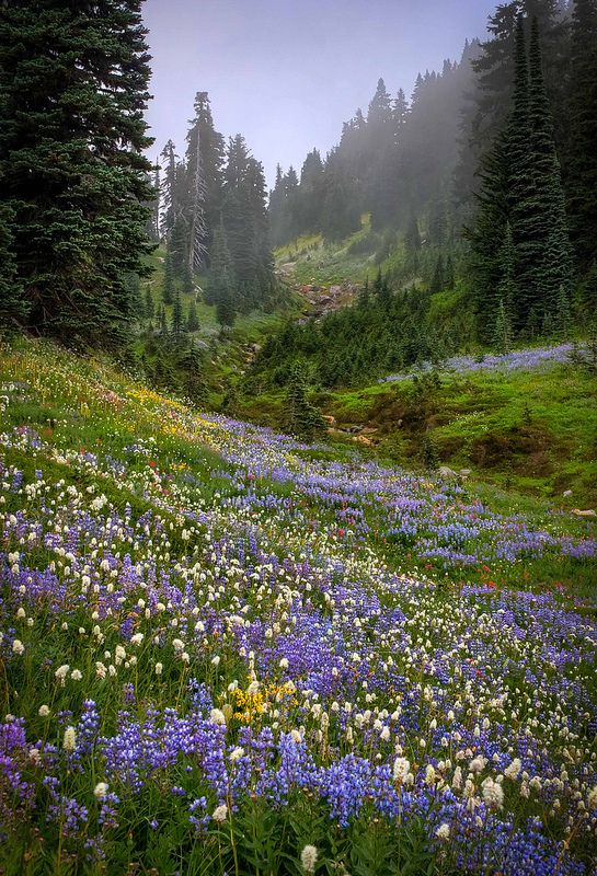 *+*Mystickal Faerie Folke*+*...By Artist Unknown ...Misty Valley, Mount Rainier, Washington...