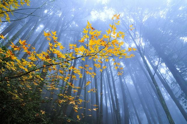 canopy: Rebus Naturae, Autumn Crush, Nature, Beautiful Scenery, Fire Tones, Beautiful Pictures, Beautiful Things