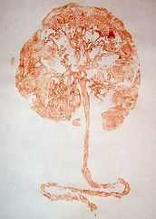 Tree of life. Placenta print.