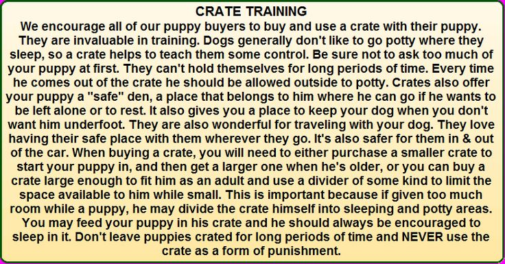 Dog Training Barking In Crate