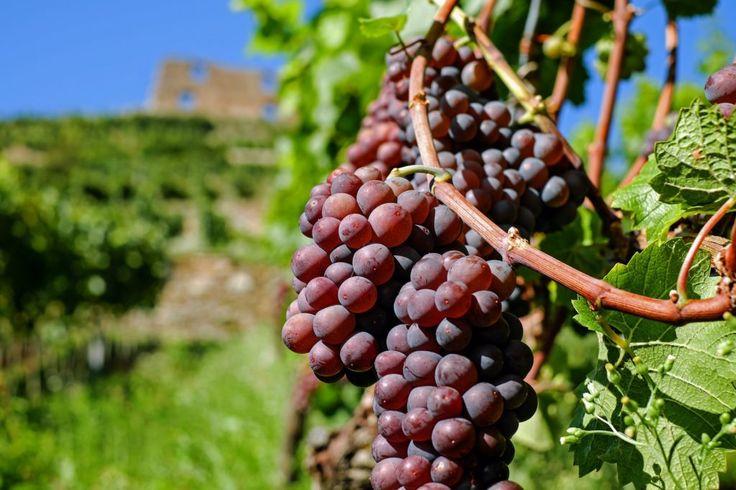 Em setembro, o que não falta em Portugal são festas das vindimas. Vão participar? / In september, Portugal has a lot of Grape Harvest festivals. Will you participate?