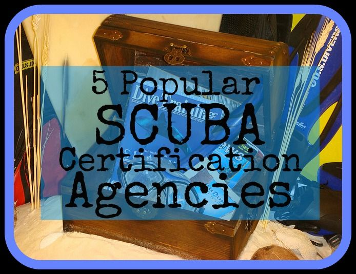 If you're looking to become a certified diver but aren't sure where to start, check out our handy guide to just 5 popular SCUBA certification agencies. http://aquaviews.net/scuba-guides/5-popular-scuba-certification-agencies/